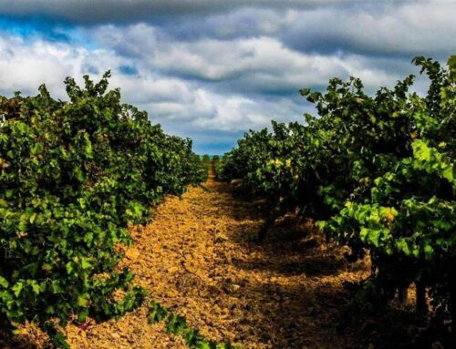 Wines of Tejo, Portugal
