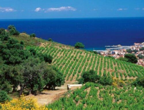 Languedoc Wines