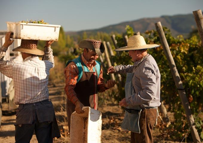 http://www.erasmo.bio/en/erasmo-organic-wine/caliboro-maule/